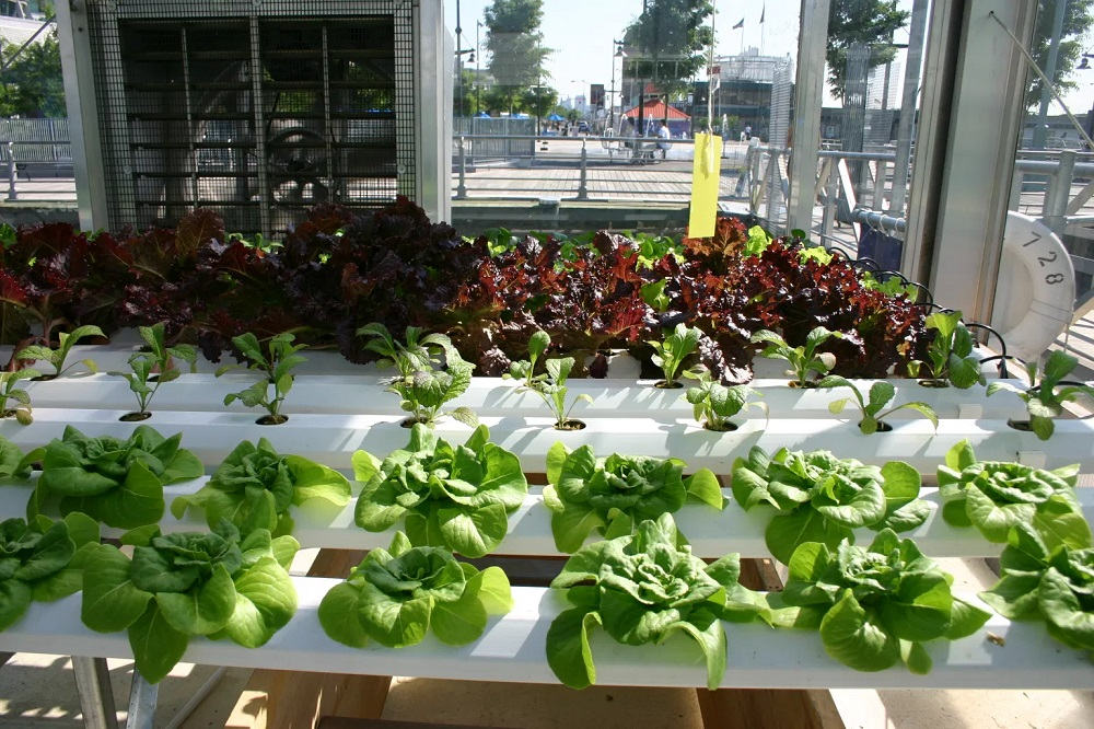 How To Grow Vegetables In A Condominium?